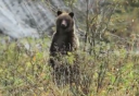 Enter the Great Bear Rainforest video